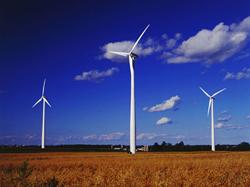 Habitat Management Wind Energy Services